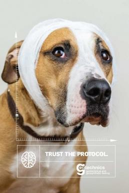 Trust the Protocol